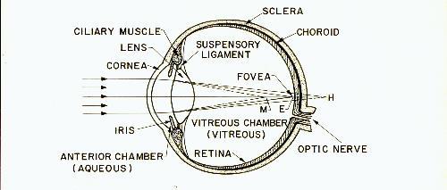The myopia myth fig 1 ccuart Choice Image